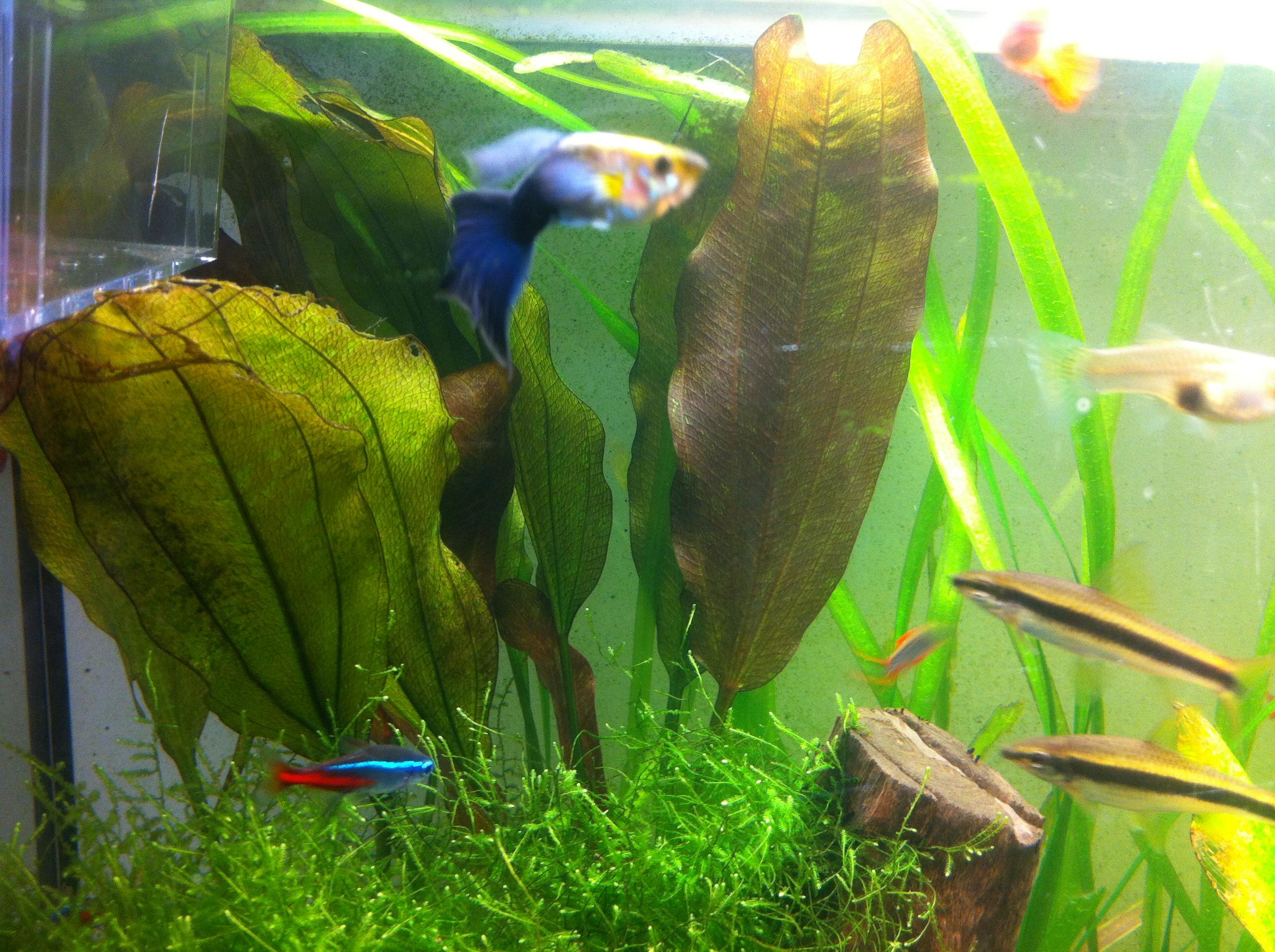 plante3 Frais De Aquarium tortue Aquatique Schème